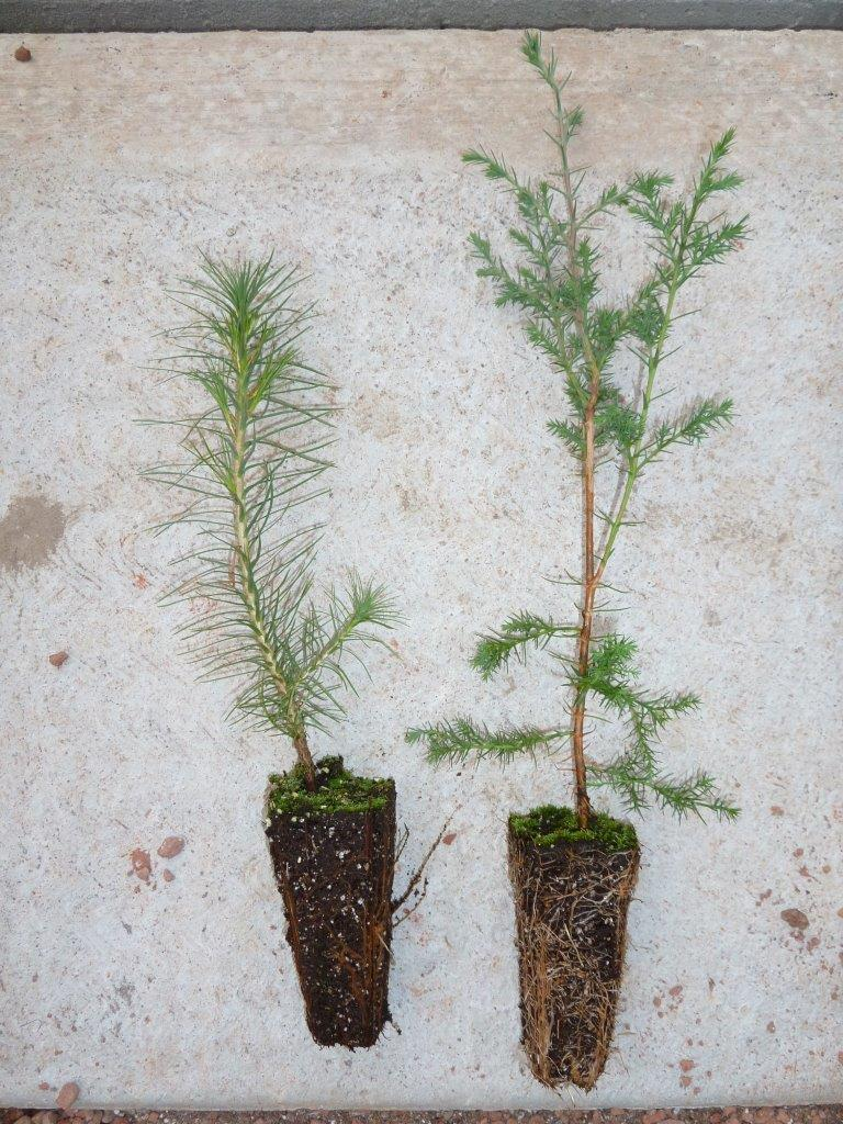 tree_seedlings11.jpg